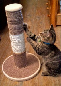 Matrix playing with his new scratching post!