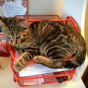 Matrix Monday: Places Kittens Will Go That You Definitely Don't Want Them To | flightandscarlet.com